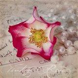Rose Romance III