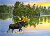 Wilderness Lake Moose