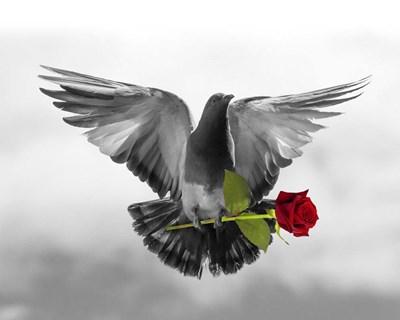 Love Bird Poster by Ata Alishahi for $56.25 CAD
