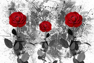 Red Roses Poster by Ata Alishahi for $43.75 CAD