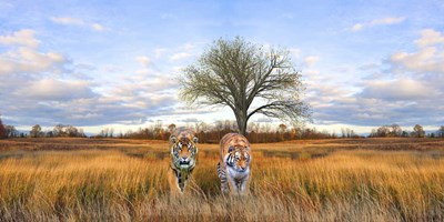 Wild Cats Poster by Ata Alishahi for $52.50 CAD