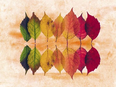 Color Of Autumn Poster by Ata Alishahi for $53.75 CAD