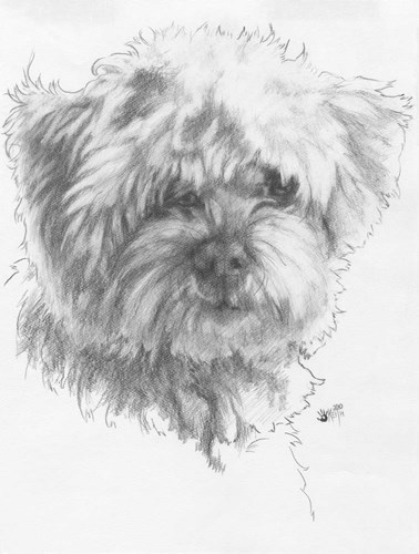 Maltipoo Poster by Barbara Keith for $41.25 CAD