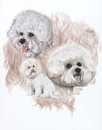 Bichon Frise Poster by Barbara Keith for $40.00 CAD
