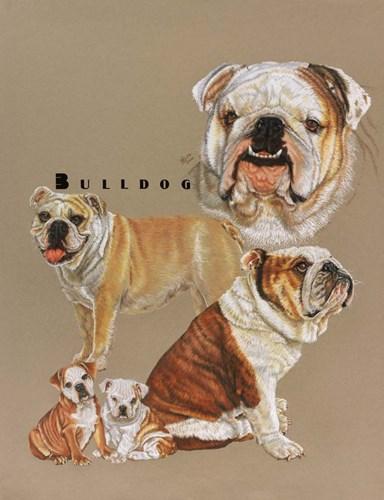 Bulldog Poster by Barbara Keith for $40.00 CAD
