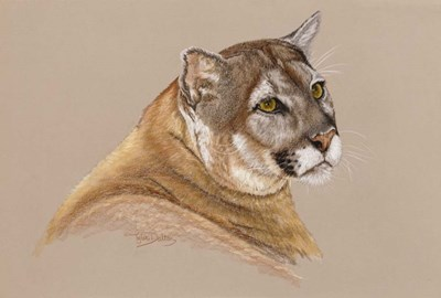 Cougar Poster by Barbara Keith for $38.75 CAD