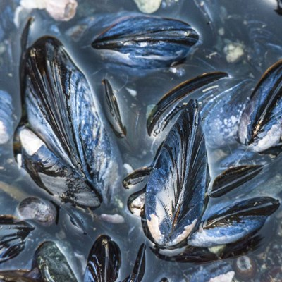 Mussels Poster by Brenda Petrella Photography LLC for $56.25 CAD