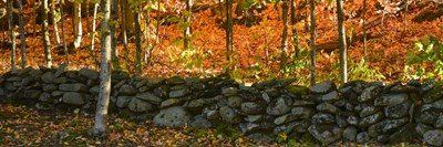 Old Rock Wall Poster by Brenda Petrella Photography LLC for $41.25 CAD