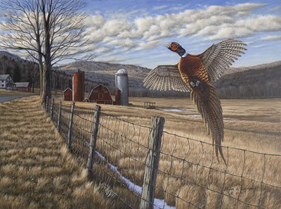 Pheasant Poster by Bruce Dumas for $35.00 CAD