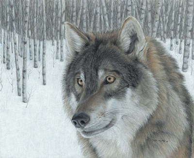 Wolf in Aspens Poster by Carla Kurt for $50.00 CAD