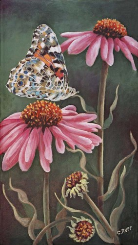 Coneflower with Butterfly Poster by Carol J Rupp for $30.00 CAD
