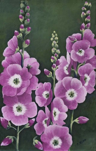 Hollyhocks in Lilac Poster by Carol J Rupp for $36.25 CAD