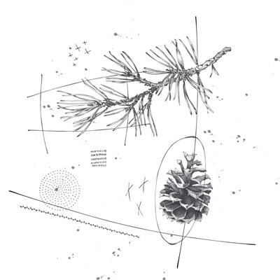 Pine Cone Poster by Christine Anderson Illustration for $35.00 CAD