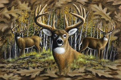 Whitetail Country Poster by Chuck Black for $62.50 CAD