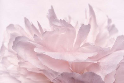 Pink Peony Petals III Poster by Cora Niele for $43.75 CAD