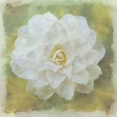 Camelia White Poster by Cora Niele for $56.25 CAD