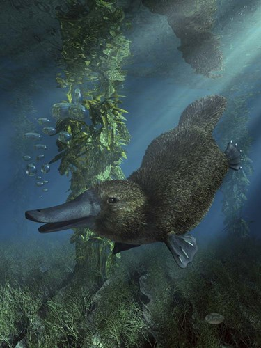 Platypus Poster by Daniel Eskridge for $41.25 CAD