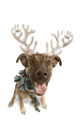 Puppy Reindeer Poster by DesignPics for $43.75 CAD