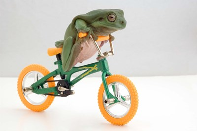 A Frog And His Bicycle Poster by DesignPics for $43.75 CAD