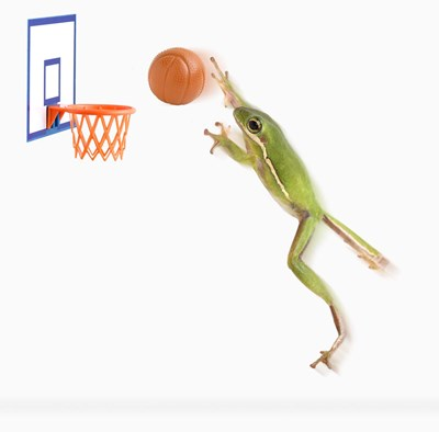 A Frog And His Basketball Poster by DesignPics for $56.25 CAD