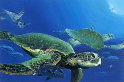Green Sea Turtles Poster by Durwood Coffey for $62.50 CAD