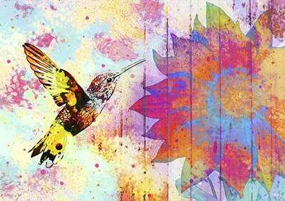 Hummingbird XVIII Poster by Fernando Palma for $40.00 CAD