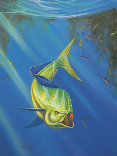 Mahi Mahi Poster by Geno Peoples for $67.50 CAD