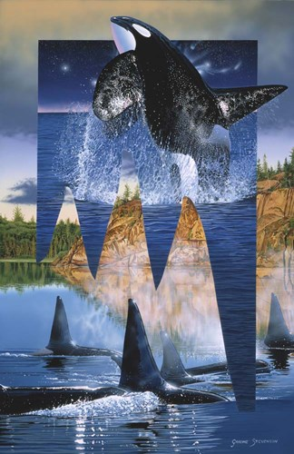 Orca Reflections Poster by Graeme Stevenson for $45.00 CAD