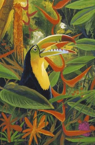 Toucan Colors Poster by Graeme Stevenson for $45.00 CAD