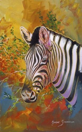 Zebra Days Poster by Graeme Stevenson for $46.25 CAD