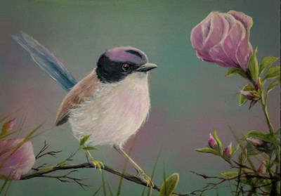 Purple Crowned Fairy Wren Poster by Greg Farrugia for $40.00 CAD