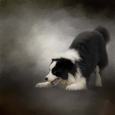 Ready To Play Border Collie Poster by Jai Johnson for $63.75 CAD