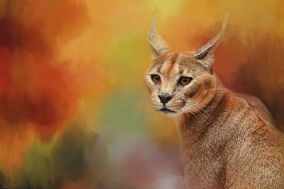 Caracal In Autumn Poster by Jai Johnson for $43.75 CAD