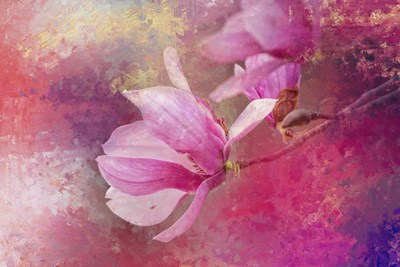 Pink Tulip Magnolia Poster by Jai Johnson for $43.75 CAD