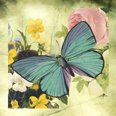 Butterfly Visions With Bleed Poster by Jean Plout for $48.75 CAD