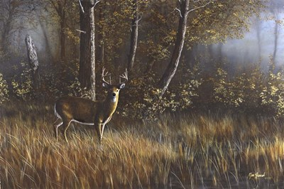 Morning Whitetail Poster by Jim Hansel for $43.75 CAD