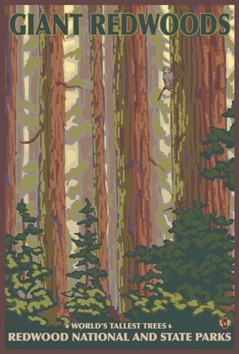Giant Redwoods Poster by Lantern Press for $101.25 CAD