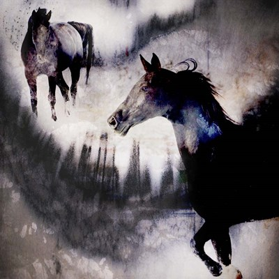 Black Mare - Dream 1 Poster by LightBoxJournal for $56.25 CAD