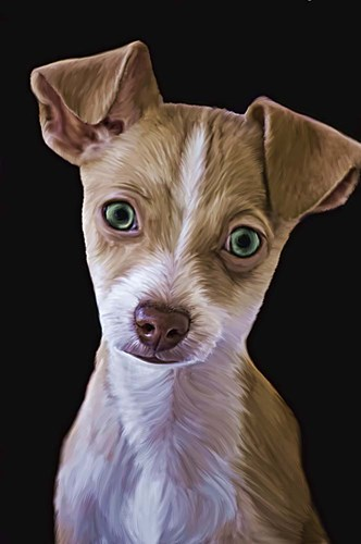 Chihuahua Poster by Lori Hutchison for $43.75 CAD