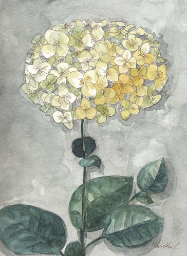Flowers Study 1 Poster by Marietta Cohen for $42.50 CAD