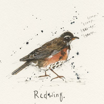 Redwing Poster by Michelle Campbell for $48.75 CAD