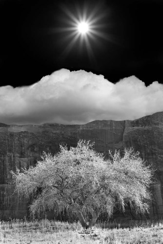 Cottonwood & Sunbeams, Canyon de Chelly, Arizona 10 Poster by Monte Nagler for $72.50 CAD