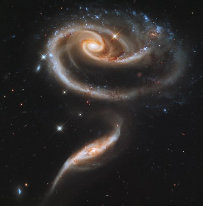 A Rose Made of Galaxies Highlights Hubble's 21st Anniversary Poster by Print Collection for $93.75 CAD