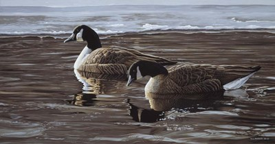 A Break In The Ice- Canada Geese Poster by Ron Parker for $53.75 CAD