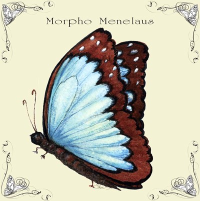 Butterfly Morpho Menelaus Poster by Sher Sester for $35.00 CAD