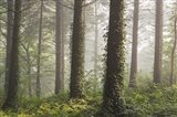 Morchard Mists