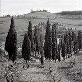 Tuscany IV