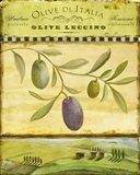Olive Grove Tuscana