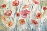 Anemone Poppies
