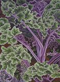 Cabbage Stalks